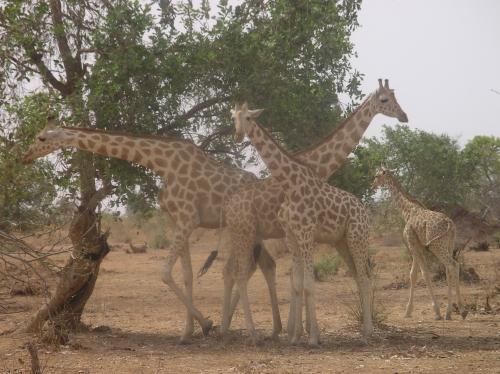 Fotos Parque Nacional W do Níger - na Burkina Faso